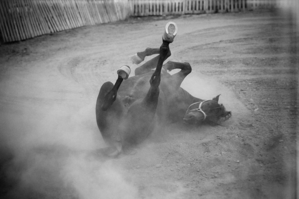 Fotografos Logroño Javier Goicoechea Reportaje Bodas Reportaje Social wild