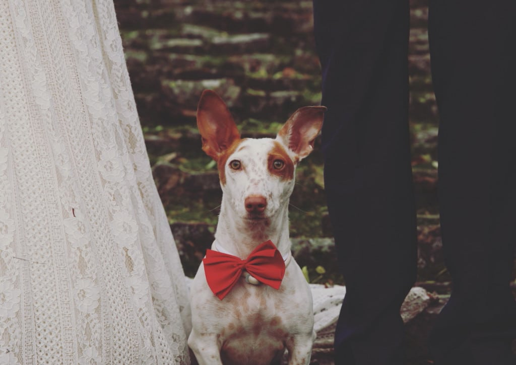 fotografos logroño javier goicoechea fotografia publicitaria bodas-0054